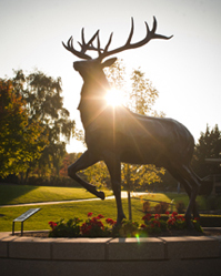 Statue of Lucas the Stag