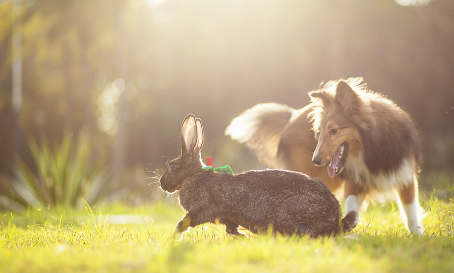 brown and white rabbit on green grass during daytime photo, by Vino Li, @vinomamba24 on Unsplash