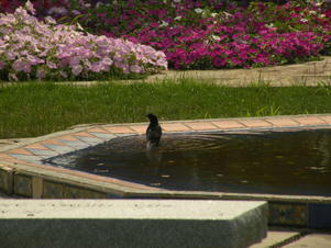 A bird on a fountain in the middle of Fairfield University's campus.